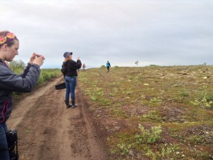Taking pictures of the tundra that goes on for ever and ever and ever! Photo by Kari Welniak